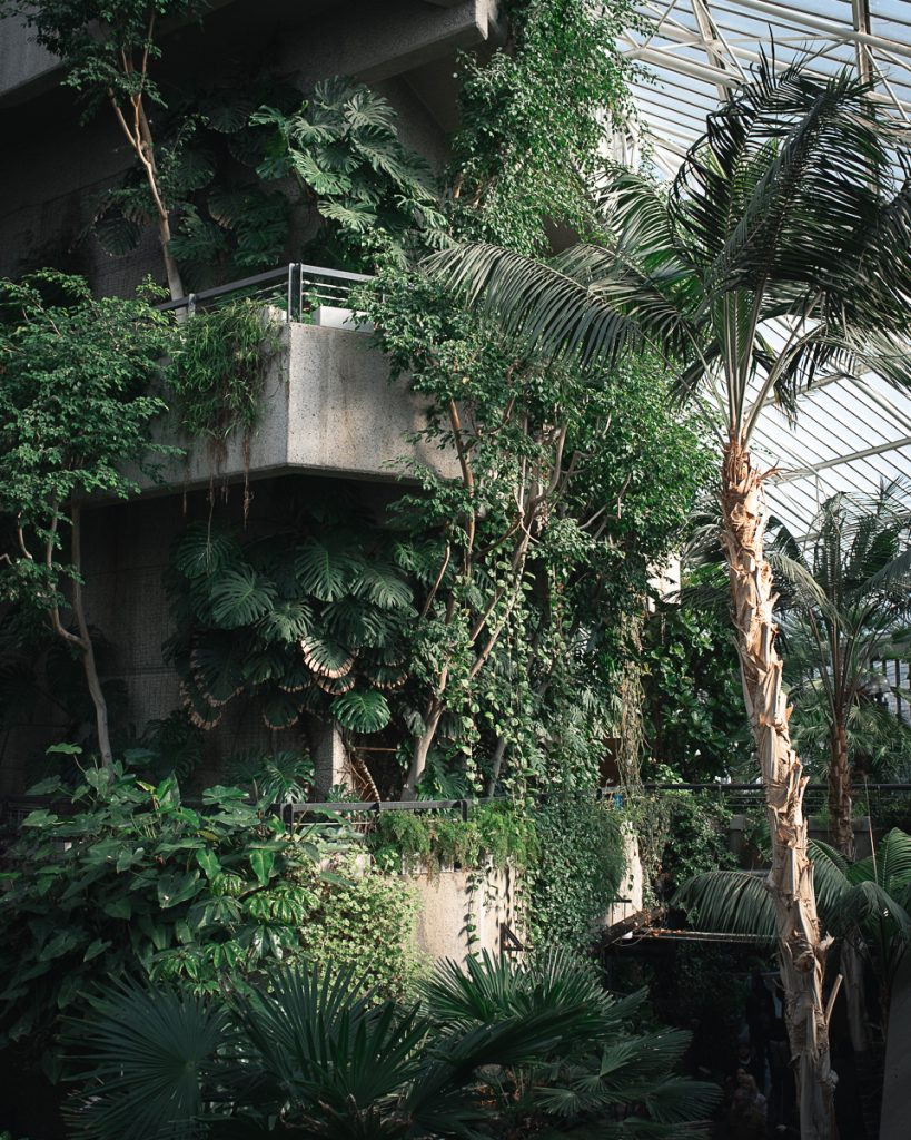 Engagement shoot at Barbican Conservatory 34 819x1024 - Engagement Photo shoot - Barbican | London